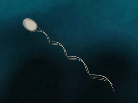 What is the function of flagella? Quora